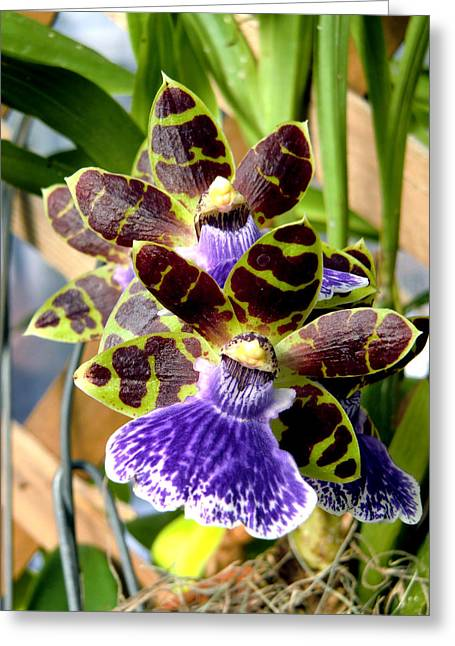 Conservatory Orchids Greeting Card