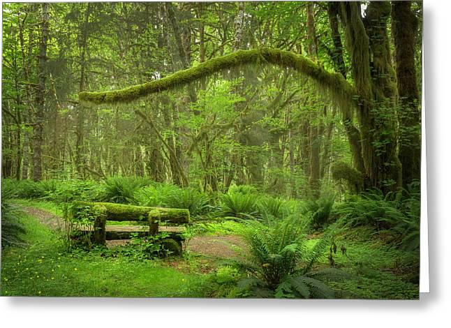 Contemplative Rain Forest Greeting Card