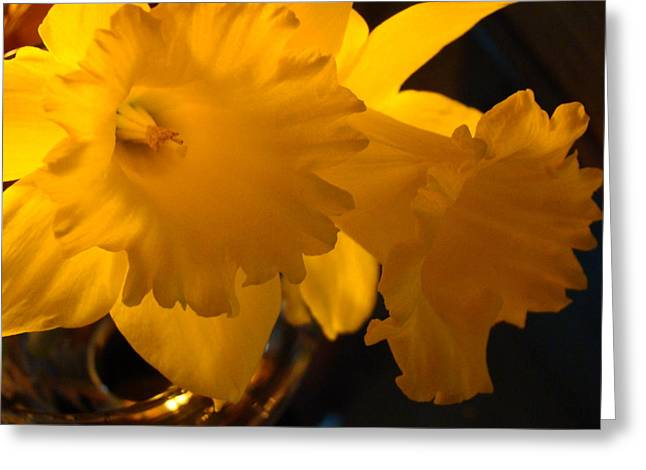 Contemporary Flower Artwork 10 Daffodil Flowers Evening Glow Greeting Card by Baslee Troutman