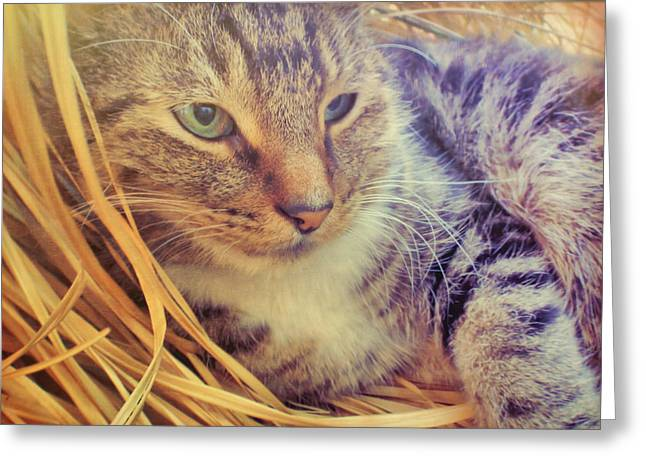 Content Greeting Card by JAMART Photography