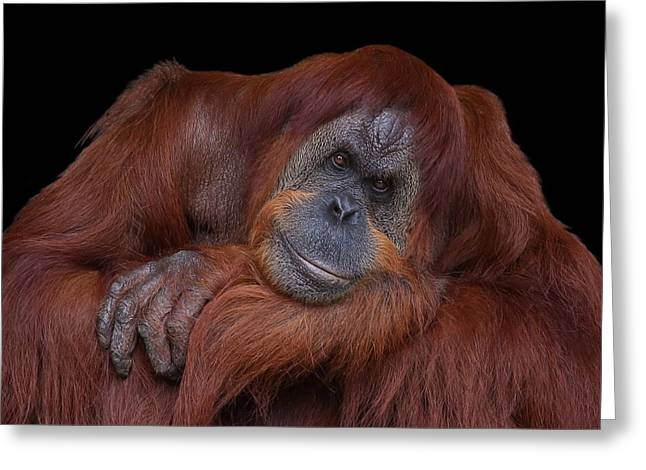 Contented Orangutan Greeting Card