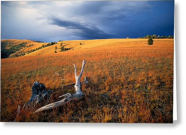 Continental Divide Greeting Card by Leland D Howard