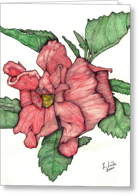 Contour Double Hibiscus Greeting Card by Edward Ruth