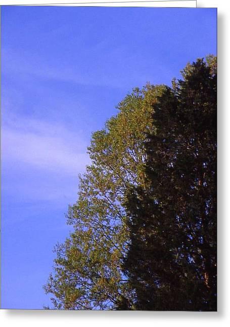 Contrasting Trees Against Sky Greeting Card by Randy Muir