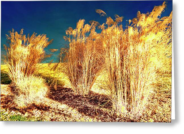 Contrasts Greeting Card by Michael Putnam
