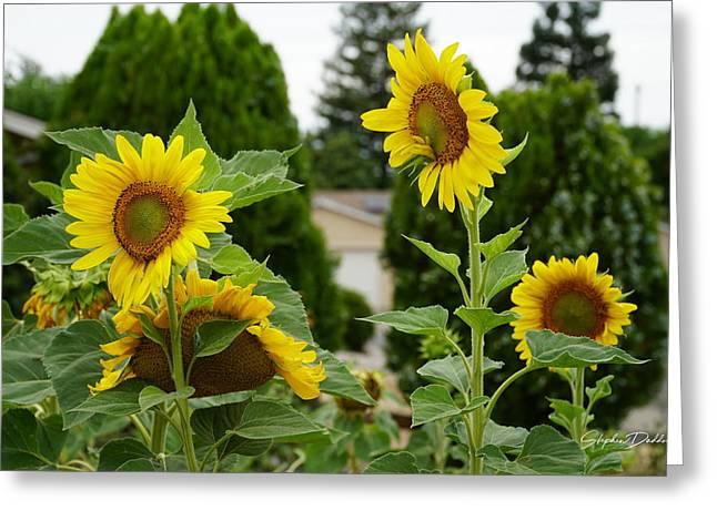 Conversing Sunflowers Greeting Card