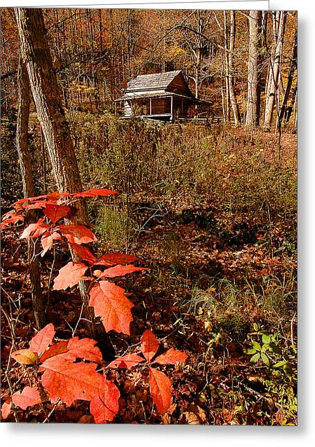 Cook Cabin Greeting Card by Alan Lenk