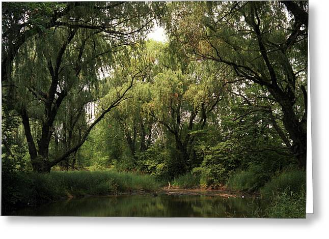 Cook County Forest Preserve No 6 Greeting Card by Kathy McClure