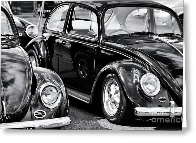 Cool Beetles Greeting Card by Tim Gainey