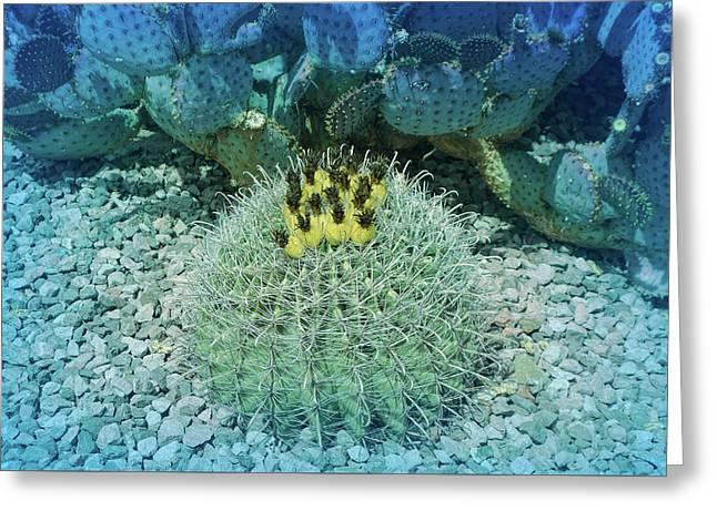 Cool Blue Budding Cactus Greeting Card