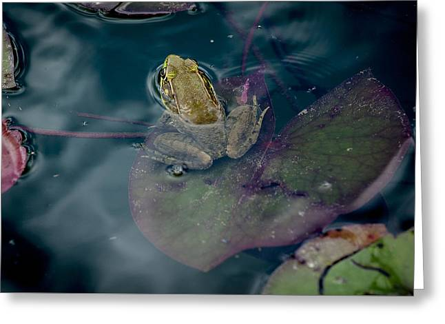 Cool Frog-hot Day Greeting Card