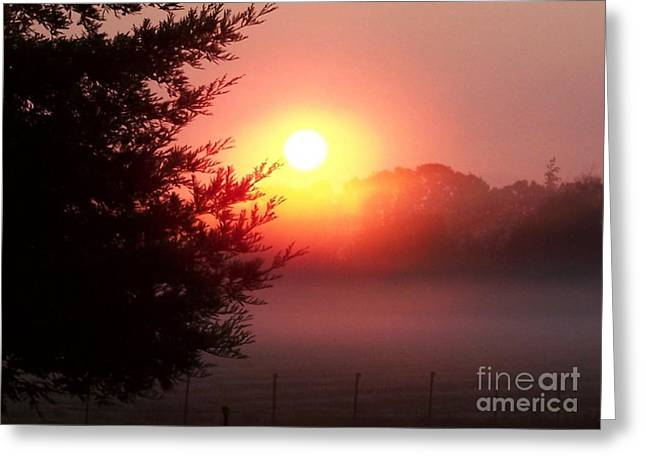 Cool Morning Greeting Card by Erica Hanel
