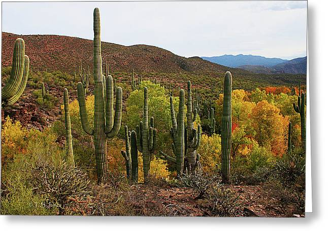 Coon Creek With Saguaros And Cottonwood, Ash, Sycamore Trees With Fall Colors Greeting Card