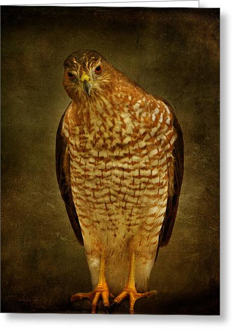 Coopers Hawk Greeting Card by Sandy Keeton