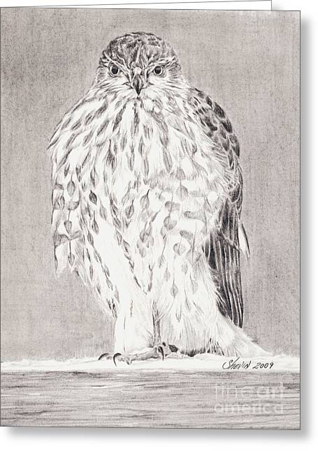Coopers Hawk Greeting Card by Shevin Childers