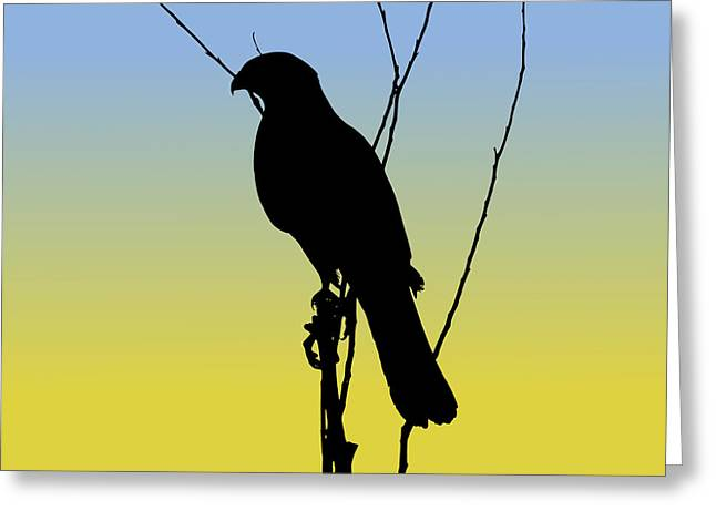 Coopers Hawk Silhouette At Sunrise Greeting Card