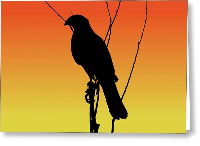 Coopers Hawk Silhouette At Sunset Greeting Card