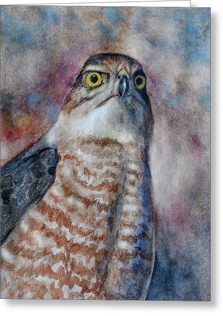 Coopers Hawk Wc Greeting Card
