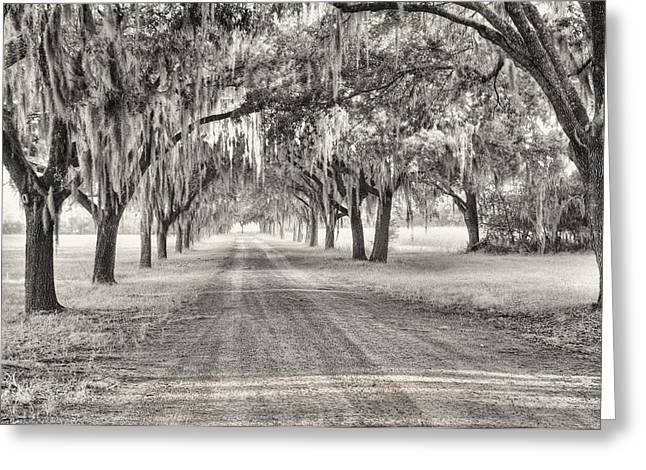 Coosaw Plantation Avenue Of Oaks Greeting Card by Scott Hansen