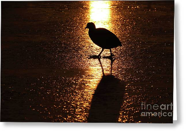 Coot Walks On Golden Ice  Greeting Card