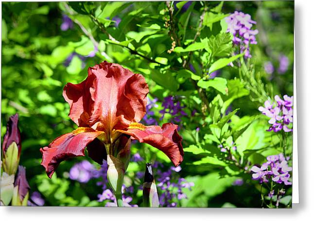 Copper Iris Study 9 Greeting Card