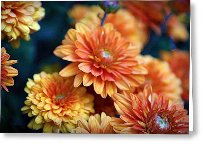 Autumn Photographs Greeting Cards - Copper Mums Greeting Card by Cricket Hackmann