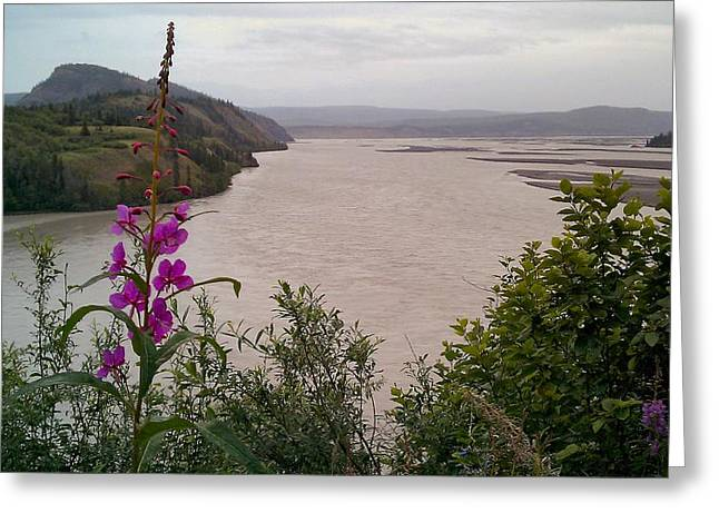 Copper River Fireweed Greeting Card by Adam Owen