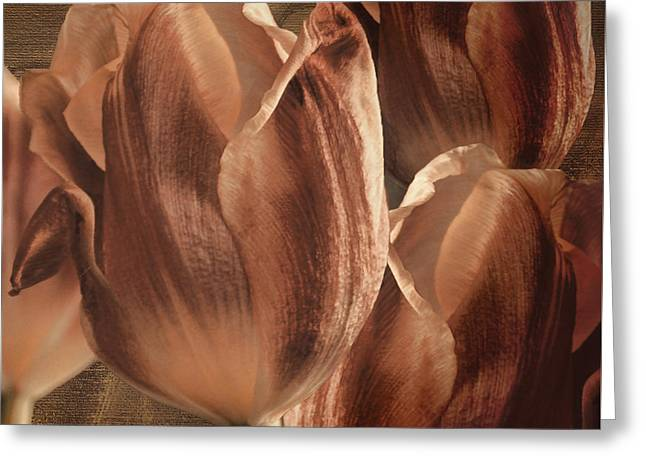 Copper Tulips Greeting Card by Mindy Sommers
