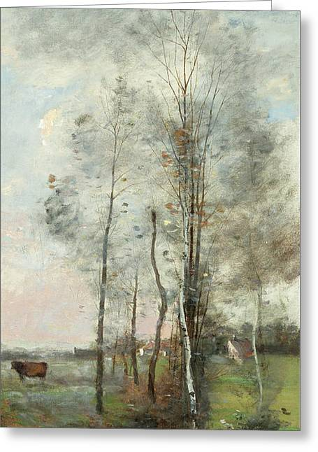 Copse Of Alder And Birch Greeting Card