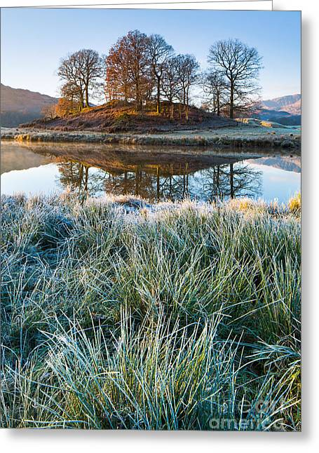 Copse Of Trees, Elterwater Greeting Card
