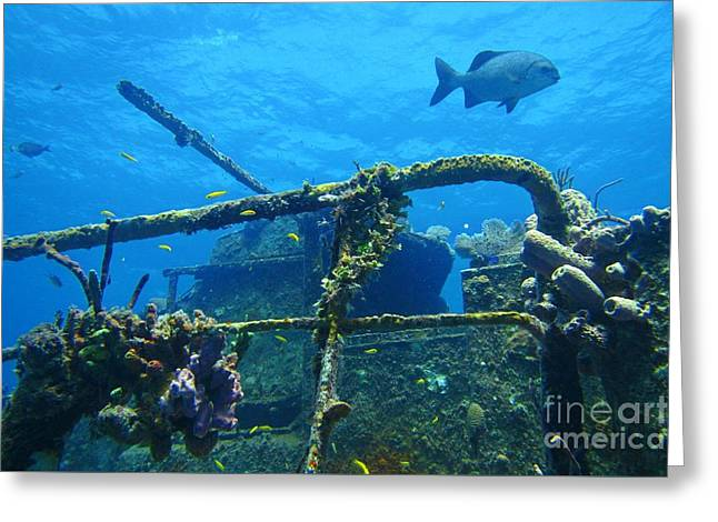 Coral And Fish On A Caribbean Shipwreck Greeting Card by John Malone