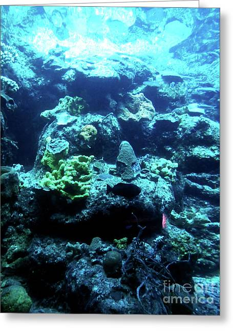 Greeting Card featuring the photograph Coral Art 4 by Francesca Mackenney