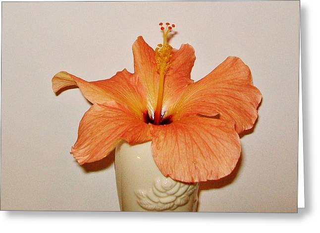 Coral Close Up Hibiscus Greeting Card