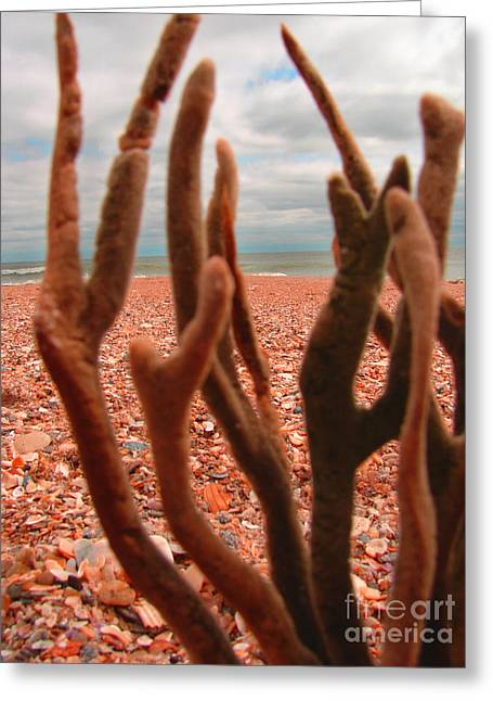 Greeting Card featuring the photograph Coral Confusion by Laura Brightwood