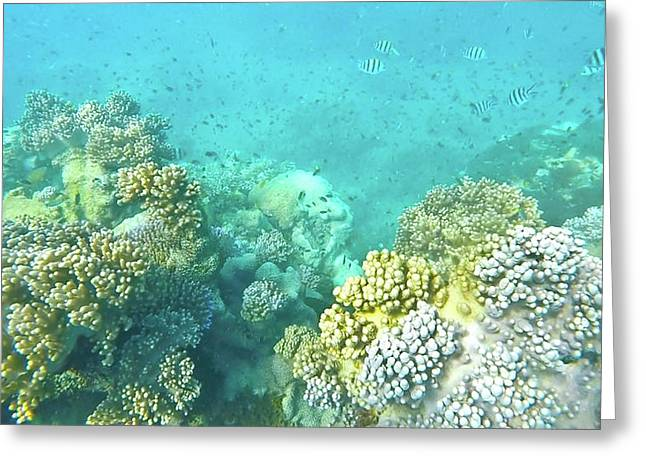 Greeting Card featuring the photograph Coral by Debbie Cundy