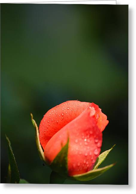 Coral Rose On Green Greeting Card by Debbie Karnes