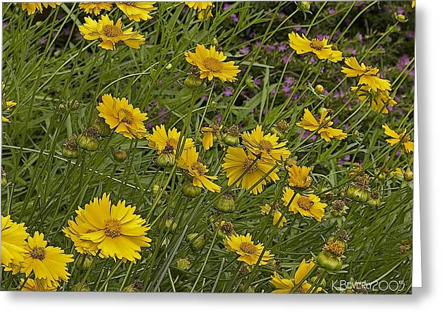Coreopsis And Mexican Heather Greeting Card