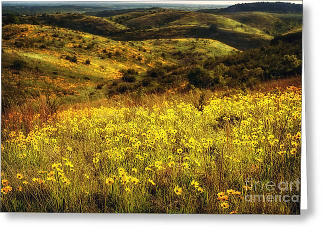 Coreopsis In The Arbuckles Greeting Card by Tamyra Ayles
