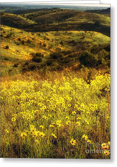 Coreopsis In The Arbuckles, Vertical Greeting Card