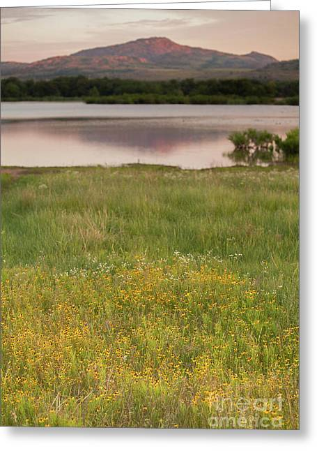 Corepsis Blooming At The Quanah Parker Lake Greeting Card by Iris Greenwell