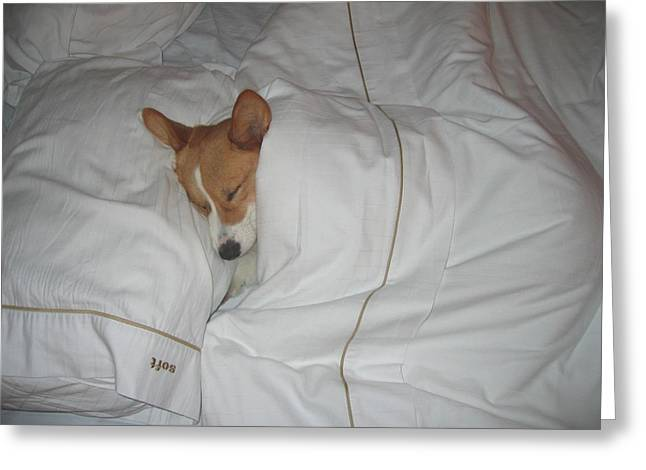 Corgi Sleeping Softly Greeting Card by Don Struke
