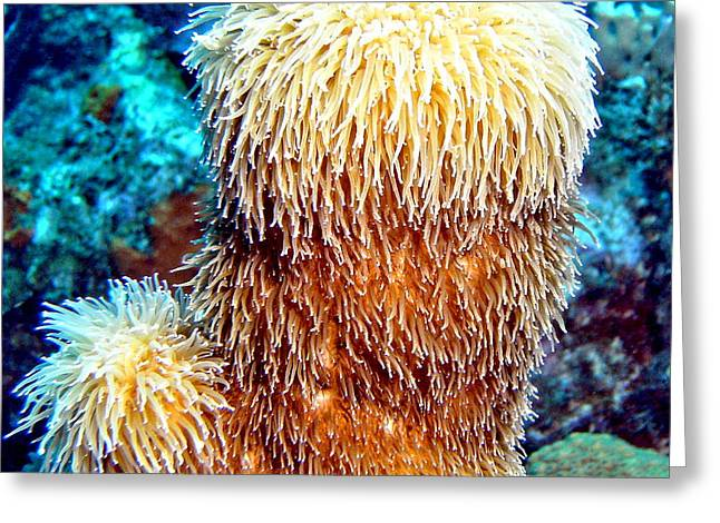 Greeting Card featuring the photograph Corky Sea Finger Coral - The Muppet Of The Deep by Amy McDaniel