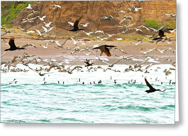 Cormorant Flight In Frenzy Greeting Card by Gus McCrea