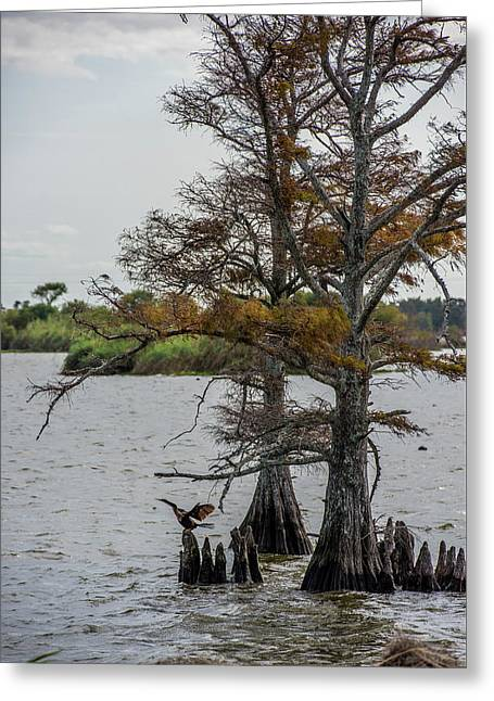 Greeting Card featuring the photograph Cormorant by Paul Freidlund