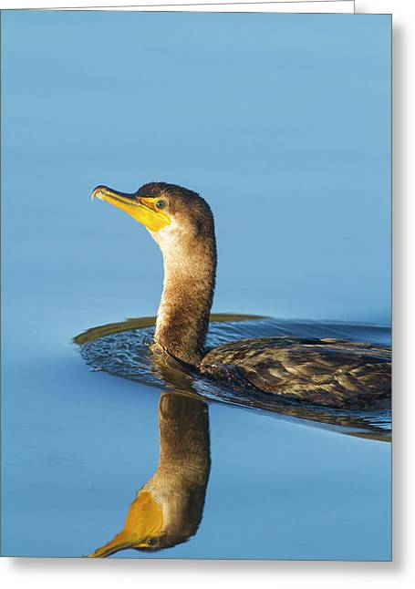 Cormorant Reflection Greeting Card