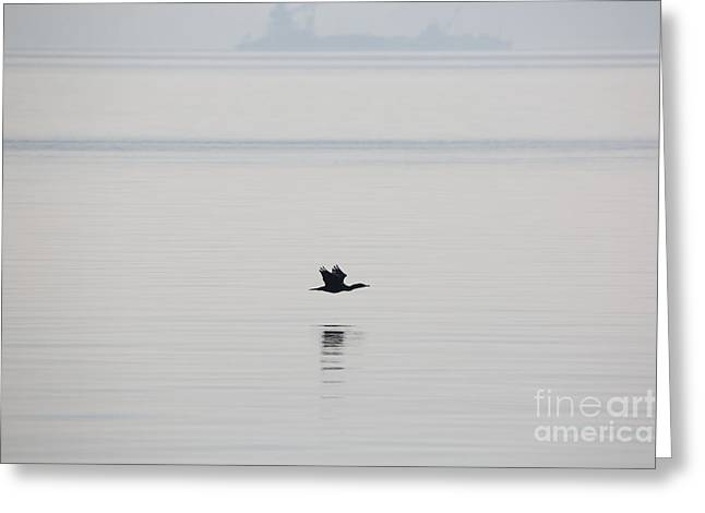 Cormorant River Peace Greeting Card