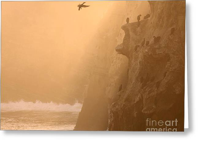 Cormorant Rookery In Dawn Fog Greeting Card by Max Allen