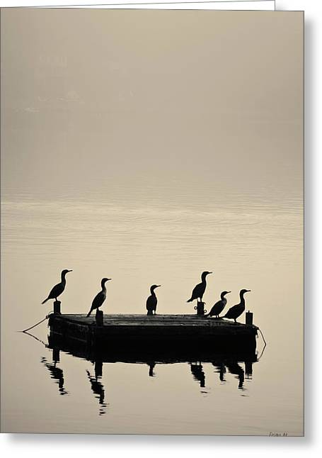 Cormorants And Dock Taunton River No. 2 Greeting Card