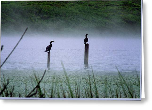 Greeting Card featuring the photograph Cormorants by Art Shimamura