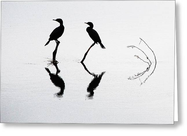 Cormorants At Rest Greeting Card